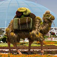 Atlanta Botanic Gardens Imaginary Worlds