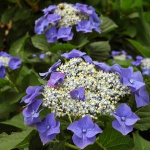 summerwebsitepictures_004b