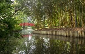 Duke Asiatic-Arboretum1-RF