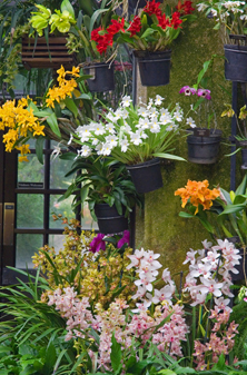 Longwood orchid_house_vert