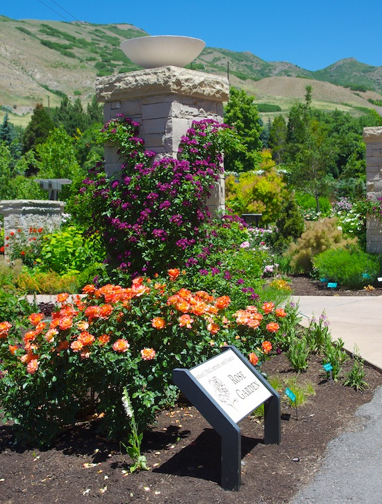 Red Butte_rose garden