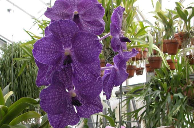 orchidgreenhouse_slideshow5
