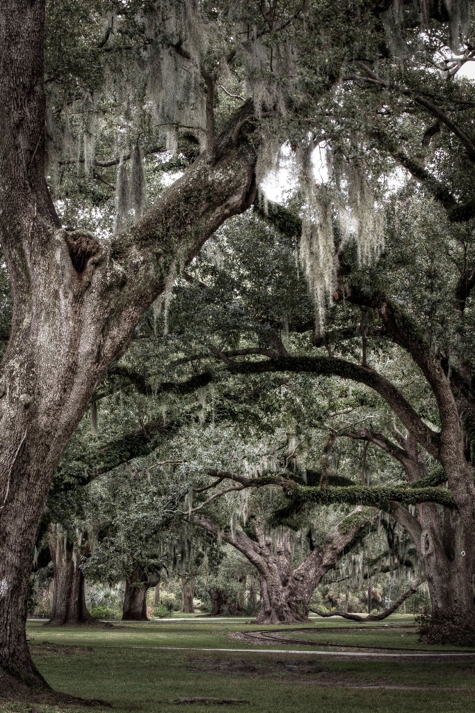 trees_long_shot_683_1024