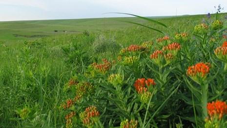 Tallgrass Prairie, Kansas